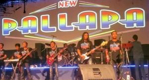 New-Pallapa